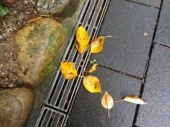 黄金色の枯れ葉